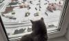 В середине марта Петербург замело снегом