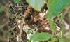 В петербургском Ботаническом саду обнаружили утиное гнездо