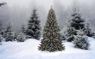 Лесничии Выборгского района рассказали о раздаче бесплатных елок на праздники