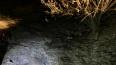 В Саранске возле школы нашли тело новорожденного ребенка
