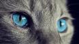 Без кота и жизнь не та: в Петербурге бесплатно раздадут ...