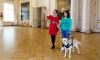 В Эрмитаже впервые экскурсию провела собака-поводырь