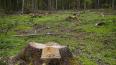 Под Выборгом лесоруб погиб из-за нарушений правил ...