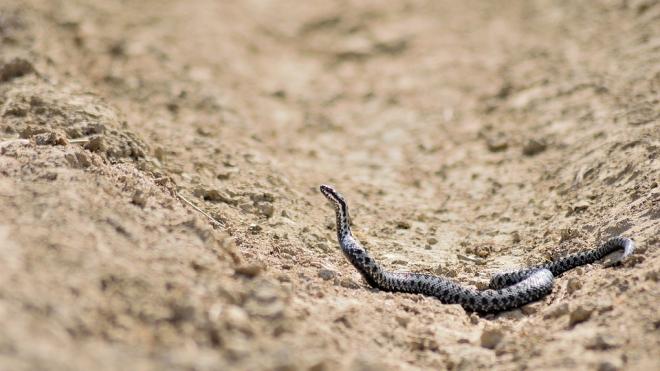 """Посетителей выборгского парка """"Монрепо"""" предупредили о змеях"""