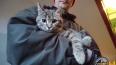 Красивую кошку сняли с дерева в Красном Селе