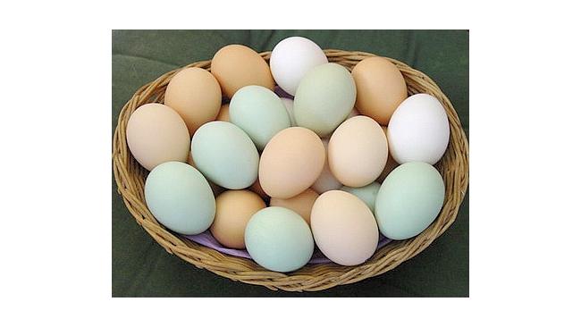 В Евросоюзе подорожали яйца