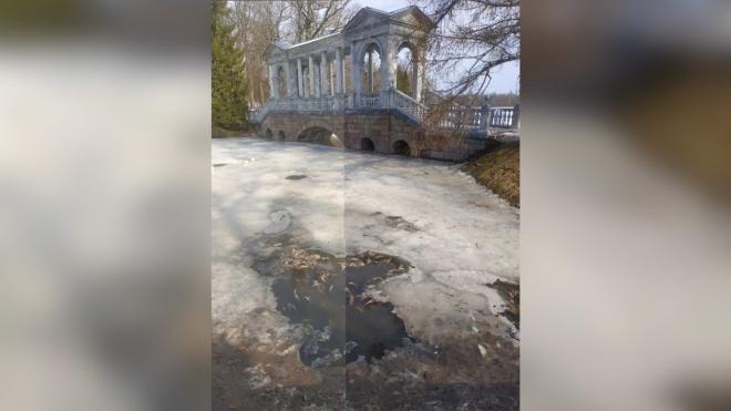 В Екатерининском парке Петербурга заметили погибшую рыбу