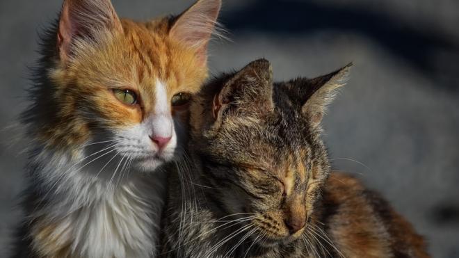 В Петербурге стартовала программа бесплатной стерилизации бездомных кошек