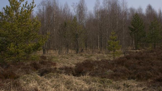 Поисковики нашли в Ленобласти место погребения 70 жертв политических репрессий