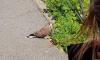 Жительница Петербурга нашла в городе сову со сломанным крылом