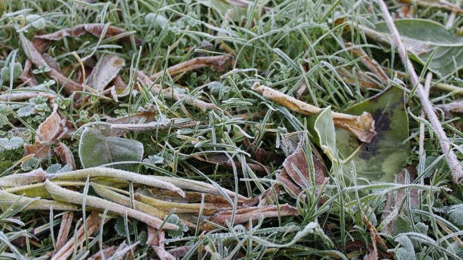 МЧС предупреждает о воскресных заморозках в Ленобласти