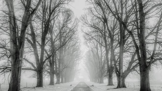 С понедельника в Ленинградской области ожидаются заморозки, мокрый снег и сильный ветер