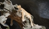 Ленинградский зоопарк попросил горожан помочь с именами для львят