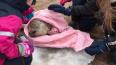 В Сестрорецке удалось спасти еще одного детеныша балтийс...
