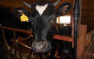 В Выборгском районе на два фермерских хозяйства стало больше