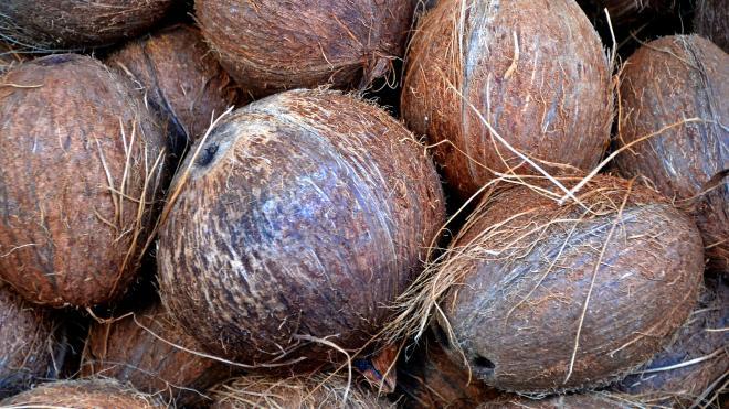 В Петербург доставили 19 тонн вьетнамских кокосов и питахайи