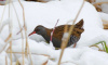 В Ленобласти была замечена редчайшая краснокнижная птица