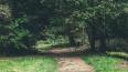 Житель Выборга прятался в кустах, пока неизвестные ...