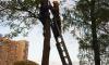 Подростка сняли с дерева в Выборгском районе. Наверх его загнал квадрокоптер