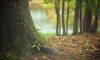 Извращенец снял штаны перед 15-летней девочкой в лесу Кингисеппа