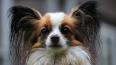 Петербуржцы спасли измученных собак, которые провалились ...