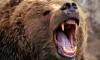 Под Иркутском собака отбила старушку от разъяренного медведя