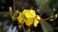 День весны и труда 2018: поздравления с 1 Мая в стихах ...