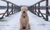 Петербурженка, подавшая в суд на бродячих собак, была замечена на сайте живодеров