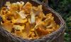 Многодетной матери из Красноярска удается прожить на деньги с продажи грибов