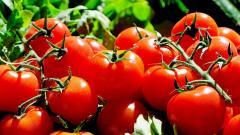 Цены на овощи в Петербурге выросли на 4%