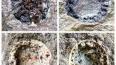Палеонтологи показали, как выглядели древние обитатели ...