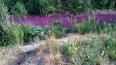 """Река Мурзинка """"перекрасилась"""" в фиолетовый"""