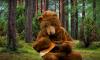 В России хотят запретить держать дома ядовитых пауков и медведей