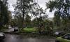 Из-за сильного ветра в разных районах Петербурга падают деревья