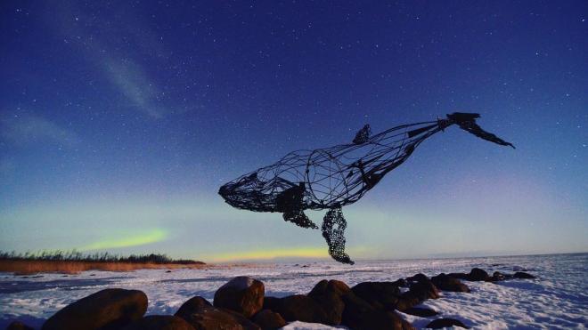 Ночью 2 марта в Ленобласти запечатлели северное сияние