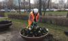 Первые цветы в Петербурге высадили на Васильевском острове и Московском проспекте