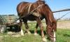 Два автомобиля столкнулись с конной повозкой в Дагестане: пять человек погибли, лошадь жива