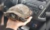 Местные жители выловили черепаху из пруда в Горелово