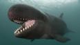 У мексиканского побережья кит протаранил туристический ...
