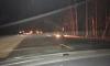 На Мурманском шоссе бензовоз вспыхнул и сгорел на глазах у шокированных водителей