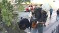 """Деревопад"": на Седова дерево упало прямо на БМВ"