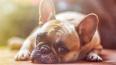 Приютам для животных выделят почти 5 млн рублей из ...