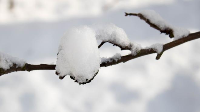 В Петербурге 28 января ожидается небольшой снег и гололедица