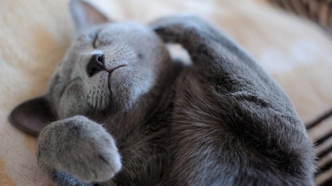 В Петербурге с 1 июля введут обязательные электронные документы на животных