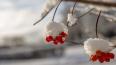 Петербуржцам рассказали, какимбудет декабрь