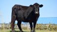 В Приозерском районе достроили новый центр мясного ...