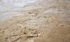 Житель Твери продает грязь с «Нашествия»