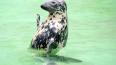 Рыбаки Ленобласти убивают нерп из-за конкуренции за водн...