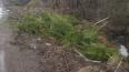 Петербуржцев огорчили свалки брошенных елок