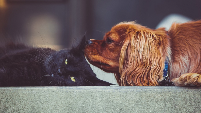 В США запретят есть мясо кошек и собак